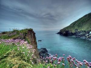 Postal: Lindas flores próximas al mar