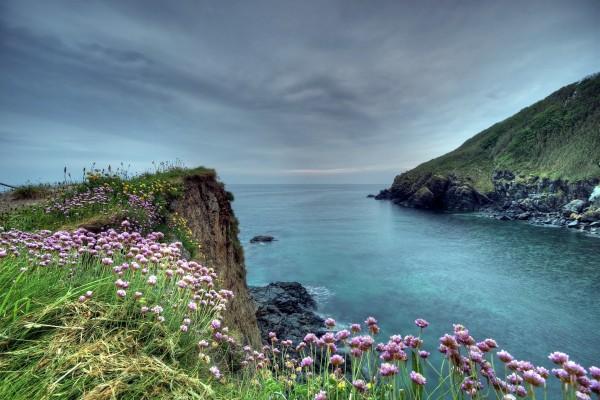 Lindas flores próximas al mar