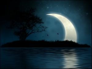 Hojas cayendo del árbol en una noche con luna