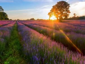 Postal: El sol iluminando un bello campo