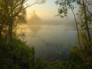Neblina en el lago