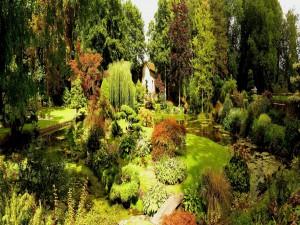 Jardín japonés en el castillo de Courances (Francia)