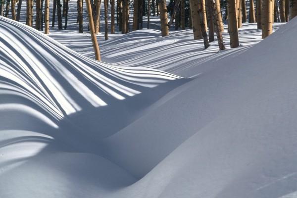 Montañas de nieve entre los árboles