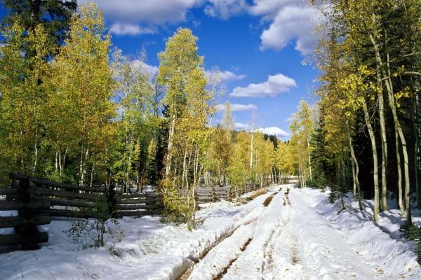 Árboles verdes en un camino nevado