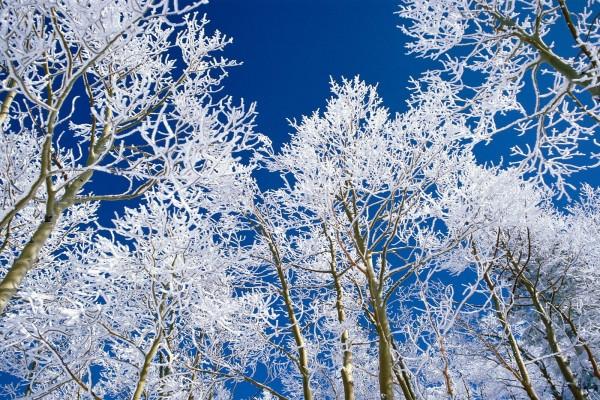 Árboles con nieve en sus ramas y un cielo azul