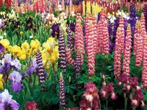 Postal: Un gran número de flores variadas adornando un jardín