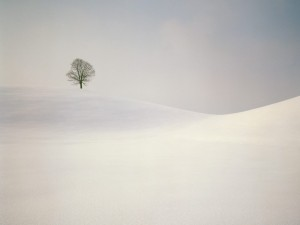 Un árbol solitario en un paraje nevado