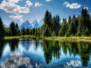 Un lago rodeado de árboles verdes