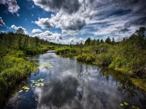 Postal: Hojas verdes en el río