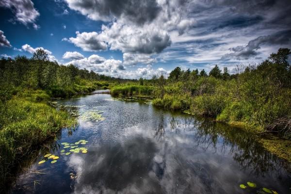 Hojas verdes en el río