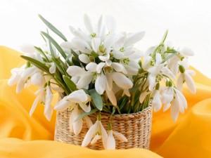 Postal: Cesta con extraordinarias y delicadas flores blancas