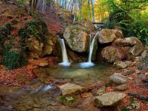 Pequeñas cascadas en el bosque