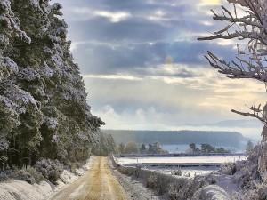 Carretera en el borde de un bosque nevado