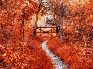 Sueño de otoño