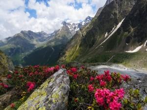 Camino con bellas flores junto a las montañas