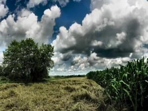 Postal: Principio de una tormenta sobre un campo