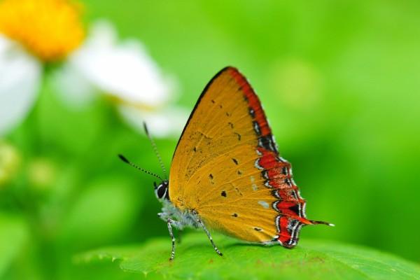 Una bella mariposa posada en una hoja verde