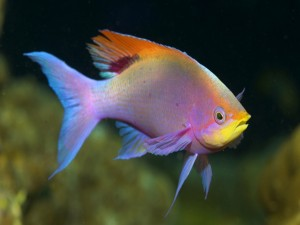 Postal: Un pez de varios colores