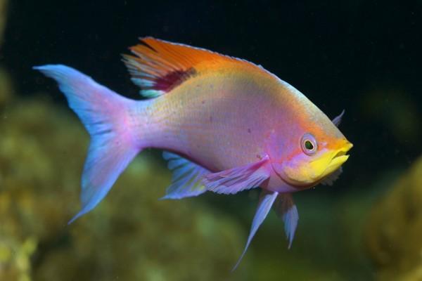 Un pez de varios colores