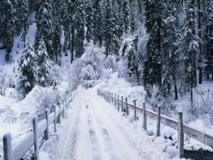 Puente cubierto de nieve