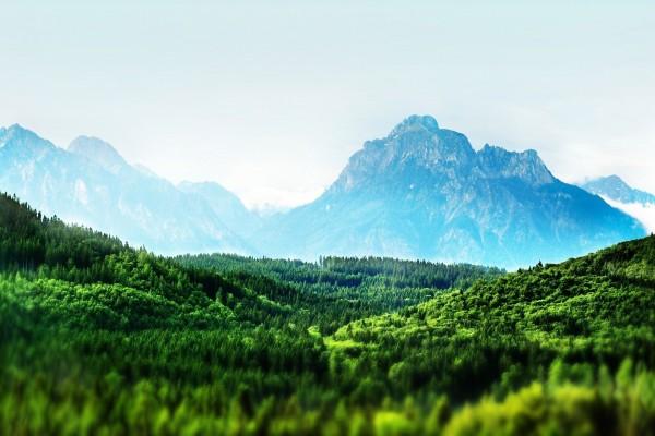 Copas de los árboles verdes bajo las montañas