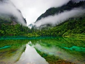 Postal: Niebla entre los árboles próximos al lago