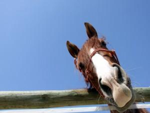 La mirada divertida de un caballo