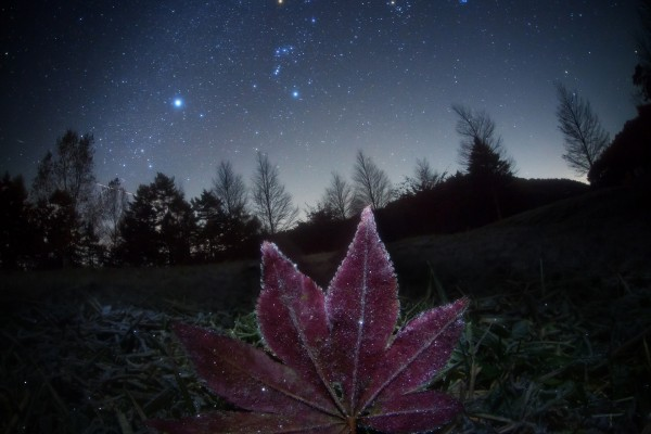 Una hoja brillante bajo un cielo estrellado