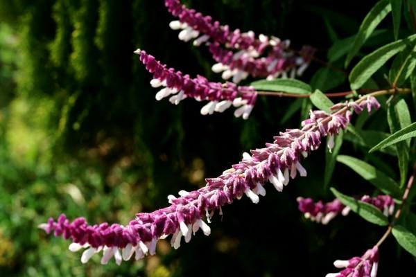 Bellas flores alargadas en una planta con hojas verdes
