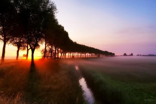 Niebla sobre la hierba al amanecer