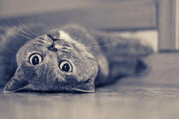 Los largos bigotes de un gato tumbado