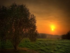 Contemplando el sol del atardecer desde un prado verde