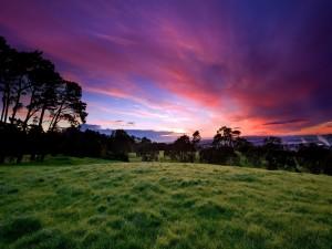 Viendo amanecer en campo de hierba verde