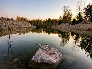Una rama seca sobre la roca