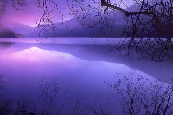 Ramas reflejadas en el agua del lago