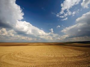 Un campo sin cultivar