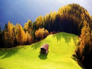 Postal: Cabaña en una explanada verde bordeada de pinos