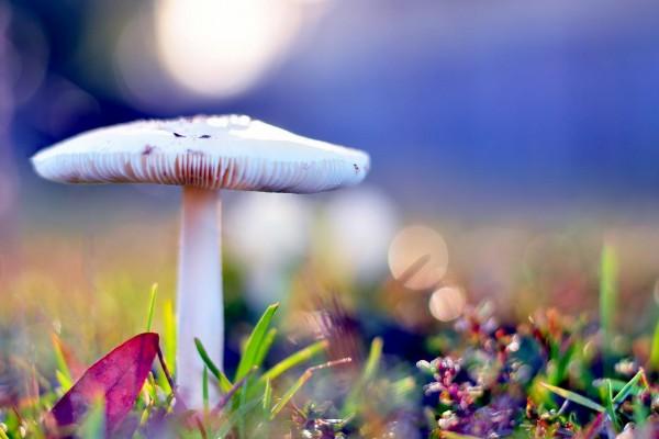 Una seta blanca entre la hierba
