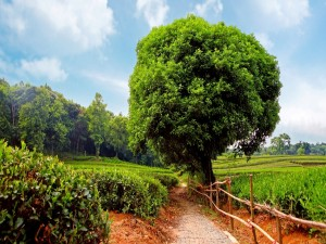 Postal: Un camino entre arbustos, plantas y árboles