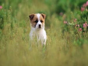 Postal: Un perro entre la hierba del campo