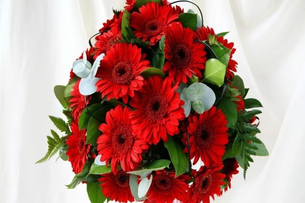 Un ramo con bellas gerberas rojas