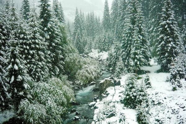 Nevando sobre el río y el bosque