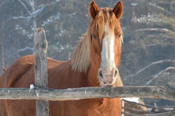 Magnífico caballo marrón
