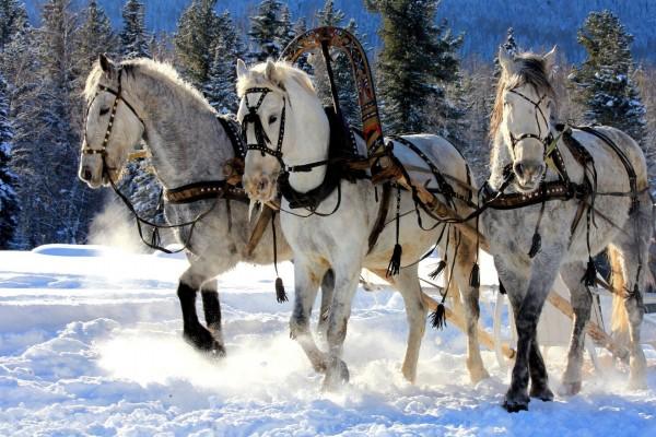 Caballos caminando en la nieve