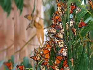 Postal: Colonia de mariposas