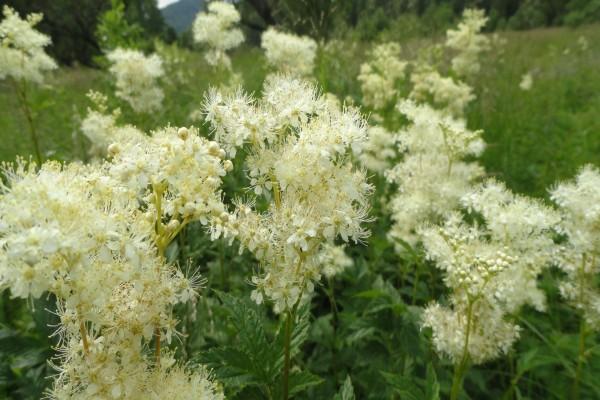 Planta con unas bonitas flores blancas