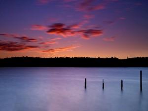 Palos verticales en el agua del lago