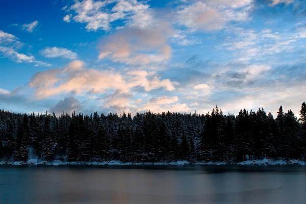 Pinos nevados en la orilla del lago