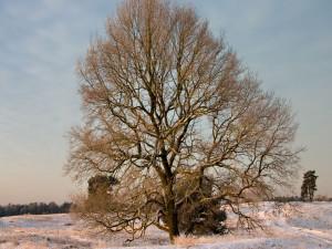 Un árbol con grandes ramas en invierno