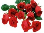 Un delicado ramo de rosas rojas